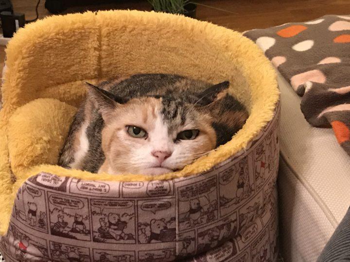 猫さんのお腹には時計と温度計が入っているらしい